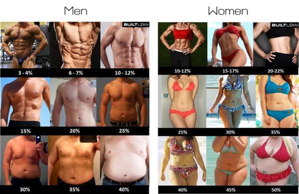 caloriebehoefte berekenen vetpercentage