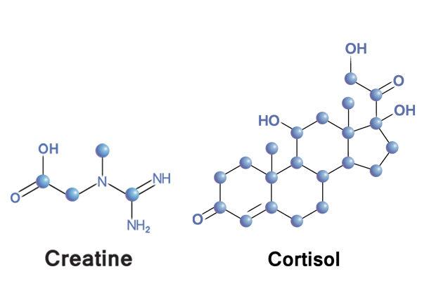 is creatine een steroïde